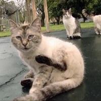 Salviamo i gatti del Parrelli di Roma