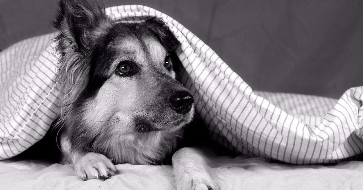 IO sono contro il maltrattamento e l'abbandono Animale.