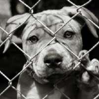 Firmiamo per Chiudere il negozio di Animali a Bussolengo