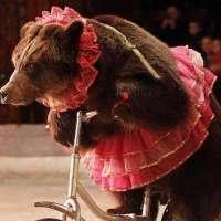 Basta circo con animali e finanziamenti pubblici
