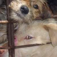 Aboliamo la carne di cane in Cina una volta per tutte