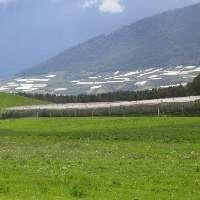 Salviamo il paesaggio dell'Alta Val di Non in Trentino