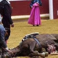 Vietare il taglio delle corde vocali ai cavalli