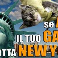 BOICOTTA NEW YORK !!! FERMIAMO LE STRAGI DI CANI E GATTI