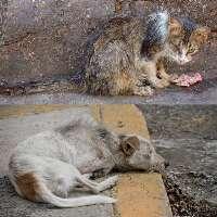 Sterilizzazione gratuita per cani e gatti
