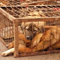 no alla vendita di animali nelle sagre e feste popolari