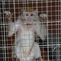 Basta sperimentazione animale a Modena