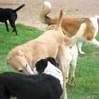 Per la strage di cani a oristano