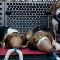 No alla sperimentazione delle sigarette sugli animali!