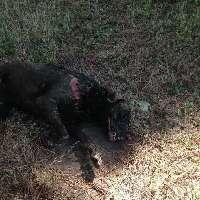 Giustizia per il cane bruciato vivo a Pozzuoli