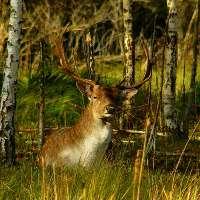 STOP alla caccia con arco in Umbria.