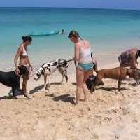 Creazione spiaggia per cani in Liguria