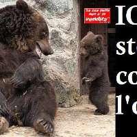 IO sto con l'orsa