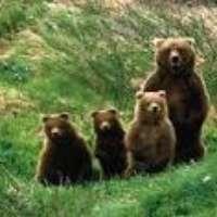 Vogliamo l'orsa Daniza libera