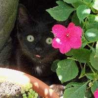 Colonia di 20 gatti chiede aiuto per l'inverno