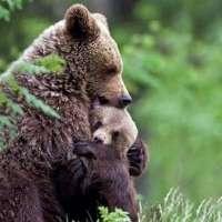 Firme per la mamma orsa Daniza.