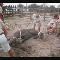 NO AL MALTRATTAMENTO ANIMALI NEI CIRCHI!