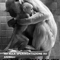 NO ALLA SPERIMENTAZIONE E VIVISEZIONE SU ANIMALI