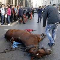 Cavallo 'botticella' stramazza a terra a Roma
