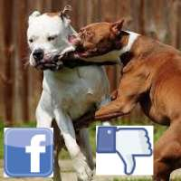 Facebook rimuovi le pagine di violenze contro gli animali