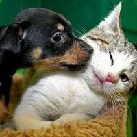 pronto soccorso veterinario per randagi a livorno