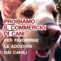 Proibiamo il commercio di cani per favorirne le adozioni