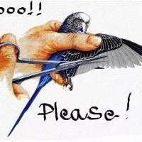 No al taglio delle ali dei pappagalli