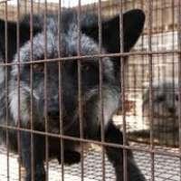 Fermiamo il commercio di pellicce cinesi in Italia!!!!
