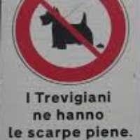 Cestini per raccolta escrementi animali a Treviso