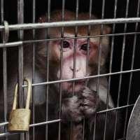 Fermiamo la sperimentazione su scimmie a Roma