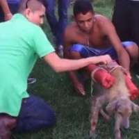 Pene più severe per chi ha fatto esplodere il cane!