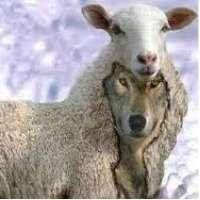 Ministerio Pastorale IMPEDIAMO al LUPO di farsi PASTORE