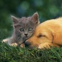 Fermiamo chi mangia cani e gatti!