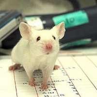 Basta tortura e vivisezione animali per inutili ricerche!