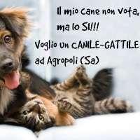 Vogliamo un canile-gattile ad Agropoli