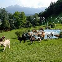 Realizzazione aree cani nel Comune di Rubano (Pd)