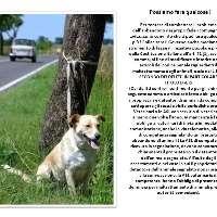 Basta un tua firma contro l'abbandono degli animali