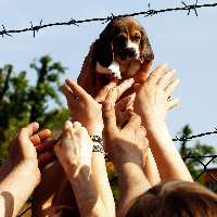 600 cani lasciati morire di fame: basta canili lager!