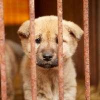 Fermiamo il commercio di carne di cane dalla Thailandia!
