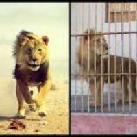 Vogliamo un circo senza animali!