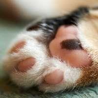 Giustizia per il gatto lasciato morire dopo ore d'agonia