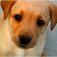 Giustizia per Scricciolo, il cucciolo ucciso per rabbia!