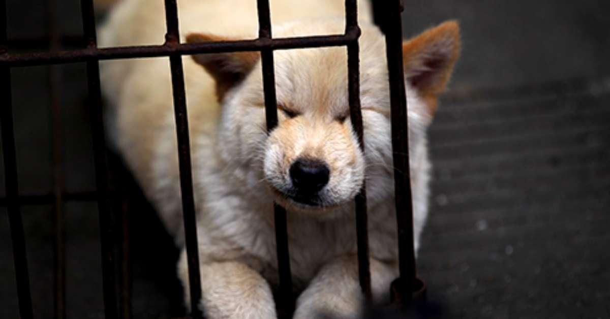 Facciamo chiudere lo Yulin Festival per sempre!