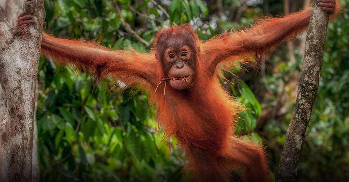 Blocchiamo le importazioni dell'olio di palma!