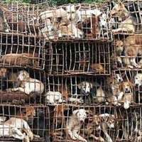 Stop the killing of animals dogs, cats in China and other