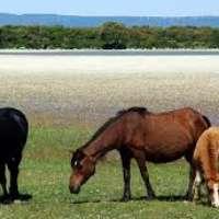 Restituire l'acqua ai Cavallini della Giara di Gesturi
