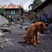 Giustizia per gli 80 animali bruciati vivi a Pistoia!