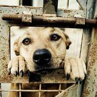 I cani in esubero nei canili non devono essere abbattuti!