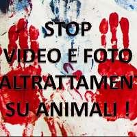 NO A VIDEO E FOTO SU MALTRATTAMENTO ANIMALE