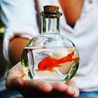 Contro l'utilizzo dei pesci rossi come bomboniere.